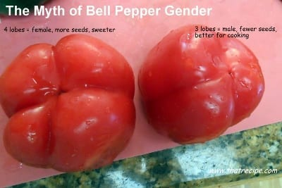Myth of Bell Pepper Gender